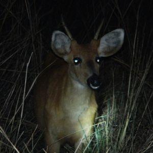 Caminata nocturna por la selva